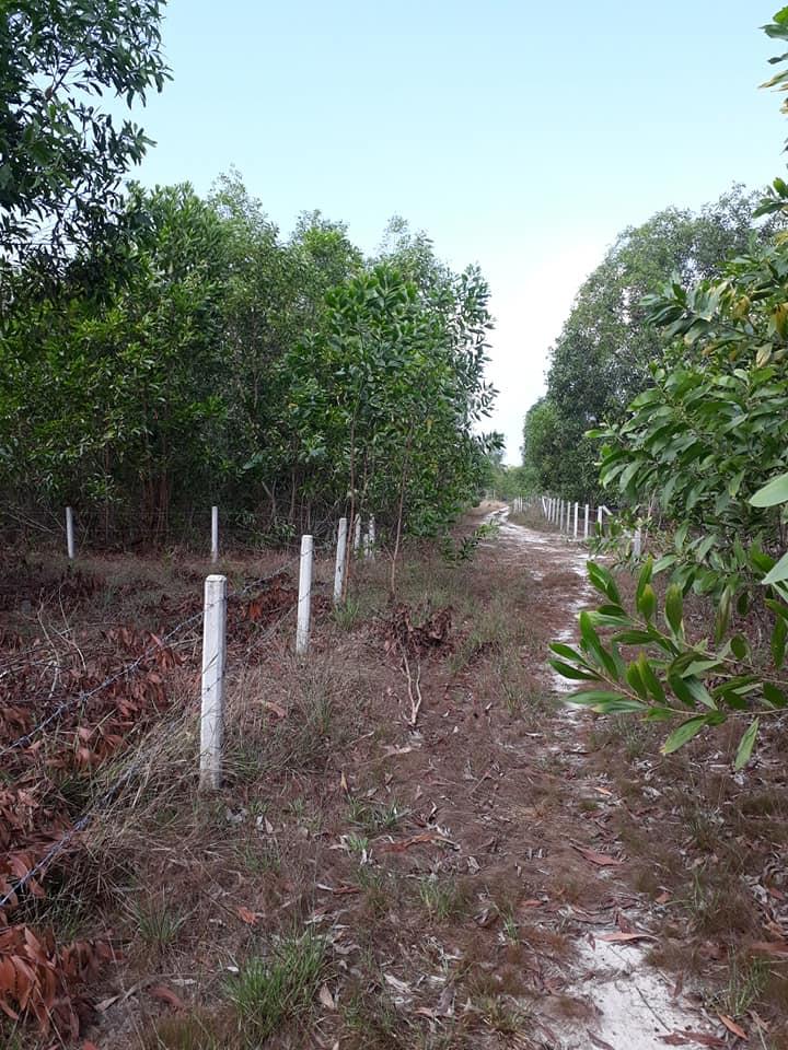 Cần bán đất Cây Thông Trong, Phú Quốc