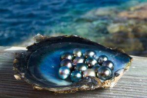 9 sản vật làm nên danh tiếng của hòn đảo Ngọc Phú Quốc