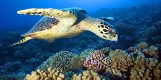 Hình ảnh rùa biển