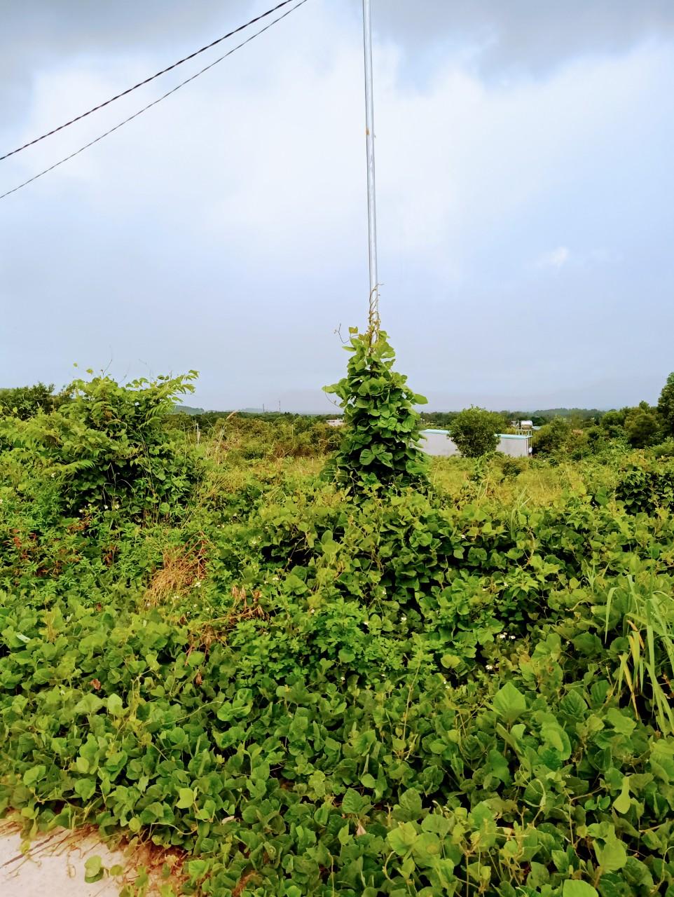 Chính chủ bán gấp lô đất đã có sổ KDC Suối Lớn, diện tích 114m2, giá 1,65 tỷ, liên hệ: 0969343138